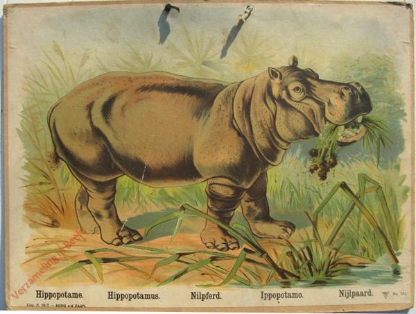 761 - Hippopotame, Hippopotamus, Nilpferd, Ippopotamo, Nijlpaard